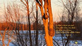 un arbre illuminé par le soleil levant